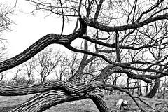 tree (LadyLove1967) Tags: bomen vogels natuur wolken gras buiten genieten zwaan nieuwleven