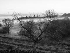 093.2016 (Francisco (PortoPortugal)) Tags: 0932016 20151221fpbo19822 nevoeiro fog portugal portografiaassociaofotogrficadoporto franciscooliveira bw pb paisagem
