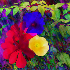 Tim's Garden (bethrosengard) Tags: photomanipulation digitalart photoart digitallyenhanced digitalmagic bethrosengard