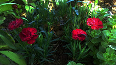 111 (jurinkof) Tags: fleurs blten   kvety kvty