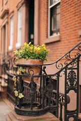 Little yellow flowers (ninasclicks) Tags: street newyork yellow flowers plant travel travelphotography fence dof streetphotography