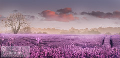 fields of dream on top of the Chilterns, UK (thomas.isabelle26) Tags: uk light england colour art nature clouds landscape photography countryside purple natural dream harvest peaceful fields colourful cloudscape