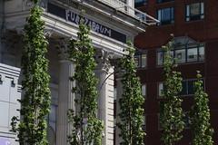 IMG_1436 (ShellyS) Tags: nyc newyorkcity trees streets buildings manhattan unionsquare