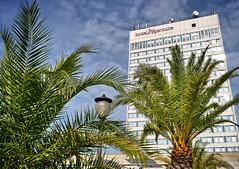 - palm (no) beach potsdam II - (-wendenlook-) Tags: color colors architecture bluesky olympus palm panasonic architektur potsdam blauerhimmel palmen 1718 gm1