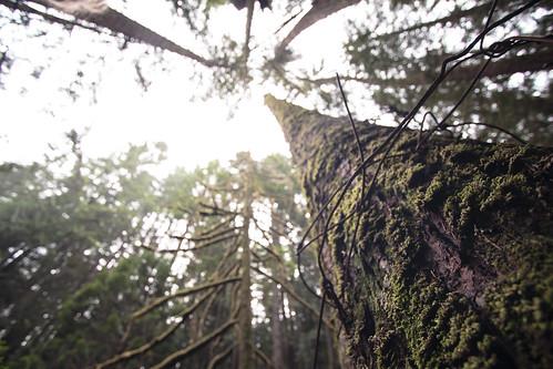 Cypress Falls Park