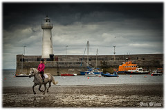 Pink Rider (D.k.o.w) Tags: horse lighthouse beach harbour tide pony northernireland trot gallop ulster donaghadee irishsea harbourwall northdown canon7dmkii granshaequestriancentre