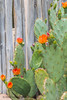 B36C6482 (WolfeMcKeel) Tags: park new city vacation flower nature gardens fence garden mexico botanical spring high flora downtown desert landscaping albuquerque flowering 2016