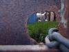peeping tom (maximorgana) Tags: wild rusty chain container mata peepingtom trashbit