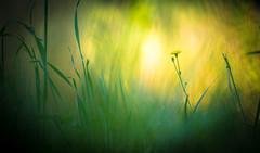 07062016-_DSC9095 (Hexilene) Tags: flowers light color macro nature fleur nikon lumire dream sigma dreams proxy nikonpassion macrodreams