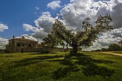 La sombra de la encina (arribamarcos) Tags: espaa primavera contraluz sombra salamanca vecinos castillayleon ermitavirgendelcueto