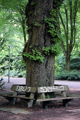 (dreamnext.de) Tags: blume hamburg stadtpark nature