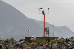 American Bald Eagle perched on a weather station in Ketchikan Harbor (Bob.Z) Tags: usa alaska us unitedstates eagle ketchikan ducktour americanbaldeagle hollandamerica