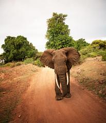 tanzania (peo pea) Tags: africa lake elephant nature animals tanzania bush wildlife natura safari manyara elefante savana