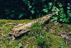 Greens (sixthstationphoto) Tags: film 35mm gold200 contax137mdquartz