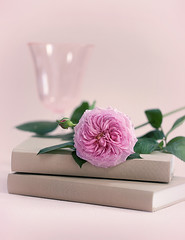 _MG_6277 a (loraine.french57) Tags: pink glass leaves rose petals books wineglass jamesgalwayrose