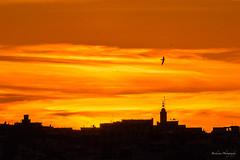 Sunset silhouette - Rabat (Bouhsina Photography) Tags: sunset sky orange color bird silhouette clouds jaune sunrise canon wow landscape rouge morocco maroc nuage nuages paysage oiseau couleur rabat 2016 brillant bouhsina 7dii ef7020028ii bouhsinaphotography