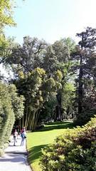 isole borromee (21) (giangian239) Tags: lago acqua blu giardino maggiore albero verde prato statua monumento isola isole borromee madre bella superiore panorama paesaggio lungolago