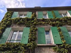 du vert au x fenetres (alexandrarougeron) Tags: faade extrieur fentre soleil ville urbain volet france vert lierre montmartre
