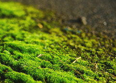 Verdant #flickrphotowalk (orbed) Tags: bokeh macro moss green texture flickrphotowalk macrotexture macromondays diagonal verdant