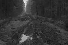 emptiness (Mindaugas Buivydas) Tags: lietuva lithuania forest tree trees bw winter january delta nemunasdelta nemunasdeltaregionalpark wood wet sadnature darkforest mood moody dark darkness eerie gloomy bismarckalgiriai road path humantouch