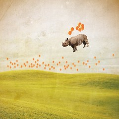 she was always late to the party . . . (Janine Graf) Tags: orange balloons surrealism surreal rhino late surrealist artrage iphone whiterhinoceros juxtaposer janine1968 blurfx scratchcam janinegraf moderngrunge iwonderifeddieredmayneispunctual