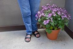 Woman Standing Next to Flower Pot (ricko) Tags: flowers woman feet legs flowerpot kath mdpd2013 mdpd1305