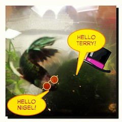 The Meeting... #Nigel #Terry #Betta #MossBall #BFFs #Fish #Plant (his 2.0) Tags: square lofi squareformat iphoneography instagramapp uploaded:by=instagram