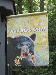 WHY BEAR WHY (moonlightbulb) Tags: zoo northcarolina nczoo asheboro
