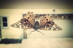 """""""The best camera is the one that's with you.."""" (Simi Tometi) Tags: camera sunlight home apple window mobile sunrise bug insect fly wings phone 4 moth cell blinds ios app moring iphone precise fragil uploaded:by=flickrmobile flickriosapp:filter=mammoth mammothfilter shilohforest"""