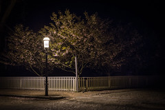 Flowering at Night (Max Hessler) Tags: flowers light color tree lamp night fence post sidewalk flowering