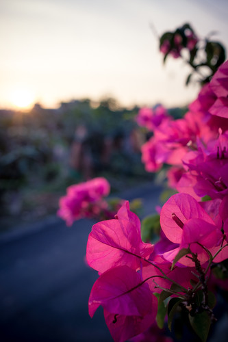 sunset & flower