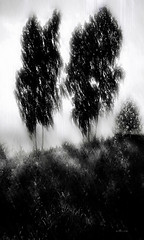 Rest in peace, unknown martyrs (Nellie Vin) Tags: trees light blackandwhite tree art print landscape shadows contemporaryart photograph memory 1941 birches fineartphotography restinpeace june14 nellievin unknownmartyrs