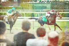The Art of Saratoga (EASY GOER) Tags: horses horse ny sports racetrack canon track state action saratoga tracks upstateny racing course event 7d newyorkstate athletes tradition races sporting spa thoroughbred equine thoroughbreds equines sportofkings
