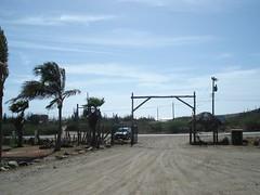 DSC03508 (FengZeTian) Tags: beach carribean aruba naturalbridge netherland catus antilles fancyfeast donkeysanctuary ostrichfarm