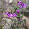 IMG_8519 (DF2006) Tags: linton canonefs1855 australiannativeplants jobytripod standpipereservoir