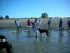 GreyhoundPlanetDaySept132009029