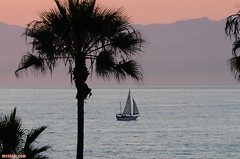 PDR979 (mcshots) Tags: ocean california travel sunset sea summer usa beach water palms evening coast losangeles scenery sailing stock socal mcshots swells