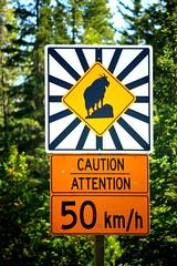 On the road, Jasper National Park, Jasper AB (Anuranjan Roy) Tags: canada jasper banff