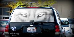 IMG_8012 (Mat_B) Tags: people white black window car back eyes sticker funny wolf walmart shade decal