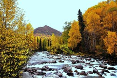 Alaska Little Susitna River (MarculescuEugenIancuD5200Alaska) Tags: alaska littlesusitnariver lapetitegalerie fleursetpaysages lagaleriedelucie top25naturesbeauty