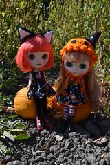 Girls in the Pumpkin Patch