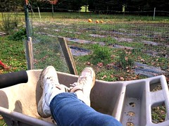 OCTOBER CLEAN UP (marsha*morningstar) Tags: fall feet garden hands gardening soil produce resting respite 2013