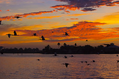 birds sunrise (dominick toscano) Tags: new color clouds sunrise canon boat photo nikon great pic friday