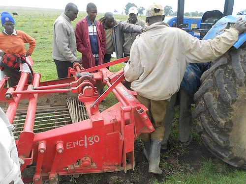 harvesting potatoes in Molo region