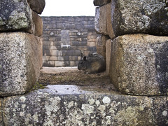 Machu Picchu (mardruck) Tags: travel vacation heritage peru southamerica inca stone lumix ruins terrace terraces ruin per panasonic latinoamerica 17 20mm machupicchu sacredvalley terraza incas sudamerica lostcity f17 m43 vallesagradodelosincas machupikchu incaculture historicsanctuaryofmachupicchu microfourthirds olympuspenep3