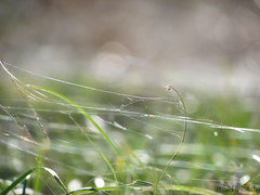 (Becky Rhodes Stiller) Tags: autumn fall nature grass photography bokeh web magic philosophy quotes naturephotography