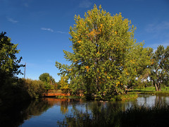 Idyllic Hudson Gardens, Littleton, Colorado (Batikart) Tags: park city bridge blue autumn trees light shadow vacation sky plants usa lake holiday tree green fall nature water grass birds animals yellow fauna clouds america canon reflections bench ge