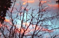 Christmas sky (Emily Savill) Tags: christmas xmas 2 sky cloud tree film clouds analog 35mm canon polaroid eos twilight branch afternoon branches iso ii 400 analogue asa elan