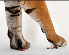 941 (Ashi Kyodai) Tags: man feet giant big paw squash trampled sole crush
