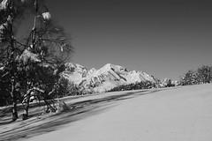(Damiano Sansoni) Tags: mountain snow blackwhite neve inverno freddo trentino biancoenero altaquota montecasale damianosansoni